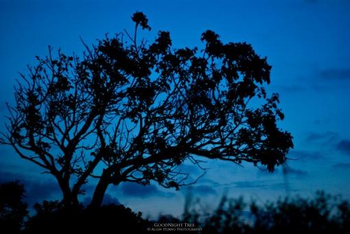 Goodnight Tree